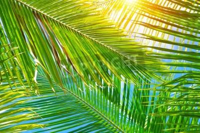 Fototapeta ? Wie? E zielone li? Cie palmy tle, jasne? Wiat? Os? Oneczne poprzez egzotyczne li? Cie, pi? Kno tropikalnych charakter, koncepcja wakacji letnich