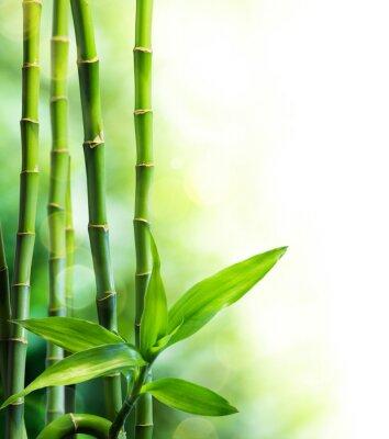 Fototapeta wiele łodyg bambusa i wiązka światła