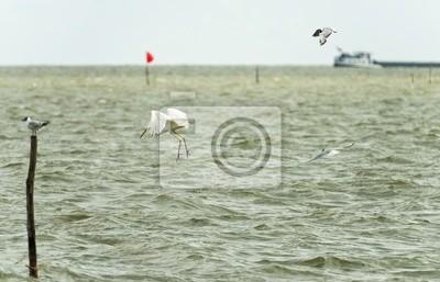 Wielki biały rybacki Czapla w jeziorze