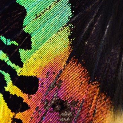 Fototapeta wielobarwny motyl skrzydła