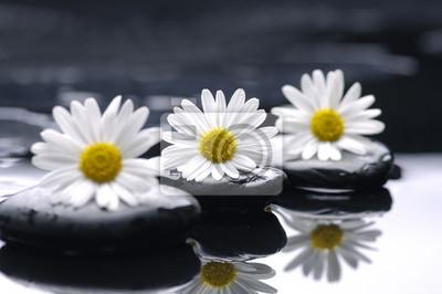 Wiersz daisy z kamieni zen refleksji