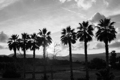 Fototapeta Wiersz palmami przeciw słońcu i górach