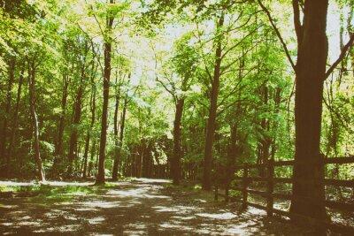 Fototapeta Wieś spacer z kręta droga przez drzewa