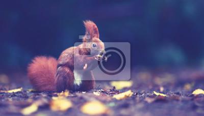 Fototapeta Wiewiórka jesienią