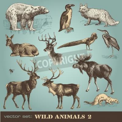 Fototapeta  wild animals