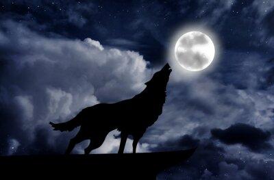 Fototapeta Wilk wyje do księżyca w pełni