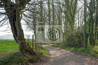 Willow wzdłuż ścieżki na wiosnę