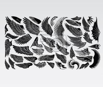 Fototapeta Wings Ptaki