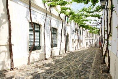Fototapeta winorośli w wąskiej uliczce białym hiszpańskiej Andaluzji