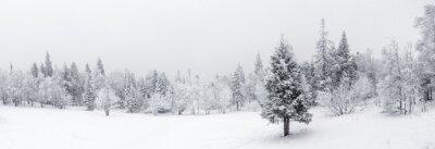 Fototapeta Winter landscape. Taganay national Park, Chelyabinsk region, South Ural, Russia