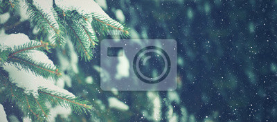 Fototapeta Winter Season Evergreen Christmas Tree Pine Branches With Snow and Falling Snowflakes, Horizontal