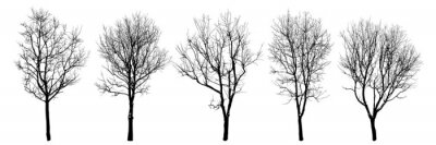Fototapeta .Winter trees silhouettes collection. Set of isolated vector design elements..  Hand drawn  illustration in sketch style.  Nature template. Clipart.