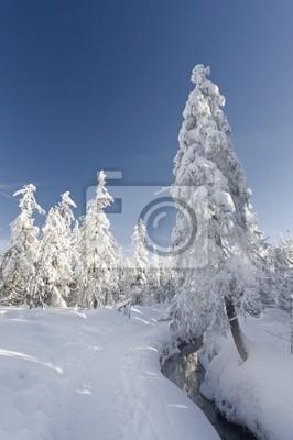 Fototapeta Winterlandschaft