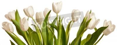 Fototapeta wiosenne tulipany kwiat samodzielnie na białym tle