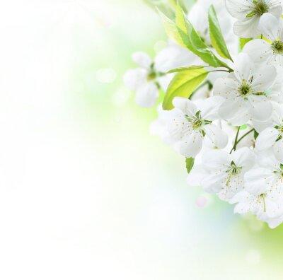 Fototapeta Wiosna Cherry border Flowers . sad