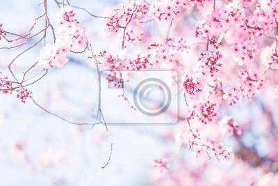 Fototapeta Wiosną drzewo kwiat przed słonecznym niebie