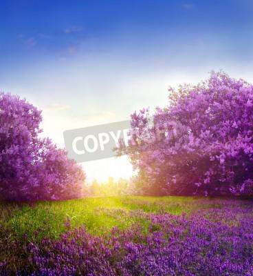 Fototapeta Wiosna krajobraz