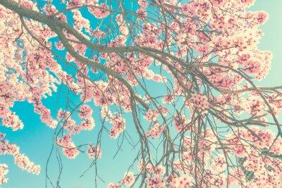 Fototapeta Wiosna kwiat