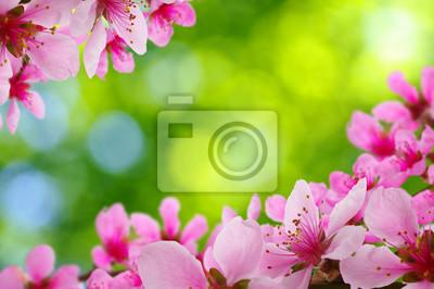 Wiosna kwiat z miękkiego rozmycie tła