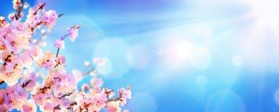 Fototapeta Wiosną kwitnące - Almond kwiaty z promieni słonecznych w przestrzeni powietrznej