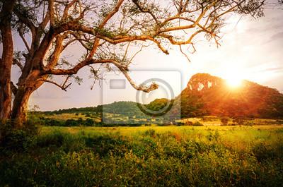 Wiosną łąki z wielkim drzewie ze świeżych zielonych liści i górskich