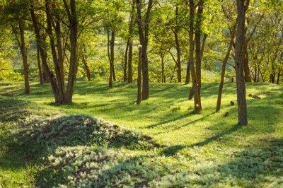 Fototapeta Wiosna, natura, piękny krajobraz i zielona trawa i drzewa