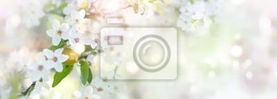 Fototapeta Wiosna z kwiatami wiśni