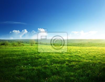 Fototapeta wiosna zachód słońca i pole trawy