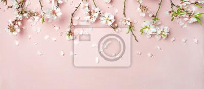 Fototapeta Wiosny kwiecisty tło, tekstura, tapeta. Flat-lay białe kwiaty migdałowe kwiaty i płatki na różowym tle, widok z góry, kopia przestrzeń, szeroki skład. Kartkę z życzeniami dzień kobiet