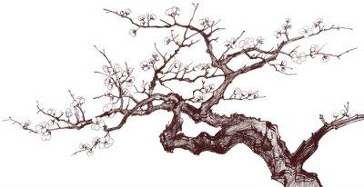 Fototapeta Wiśniowe drzewo obrazem mądrości
