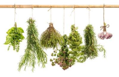 Fototapeta wiszące bukiety świeżych przypraw ziołowych na białym