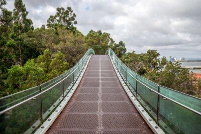 Fototapeta Wiszący most pieszy nad drzewami w Kings Park w Perth