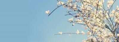Fototapeta Wizerunek piękni biali kwiaty i niebieskie niebo.