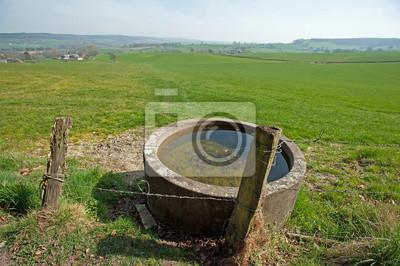 Woda dla bydła i drut kolczasty na wiosnę