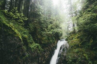 Fototapeta Wodospad na potoku w lesie deszczu