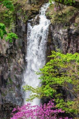 Fototapeta Wodospad Stream z różowe kwiaty