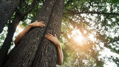 Fototapeta Woman hugging a big tree in the outdoor forest, Ecology and nature, Protect environment and save the forest, Energy sources for renewable, Earth day.