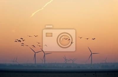 Wschód słońca nad lotu ptaków w zimie
