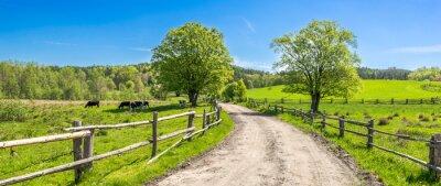 Fototapeta Wsi krajobraz, rolny pole i trawa z pastwiskowymi krowami na paśniku w wiejskiej scenerii z wiejską drogą, panoramiczny widok