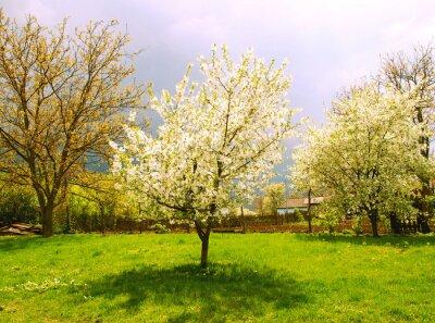 Fototapeta Wsi krajobraz wiosna w Ukrainie