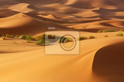 Wydmy i łąki pustyni