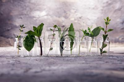 Fototapeta Wyhodowane i aromatyczne zioła w szkle