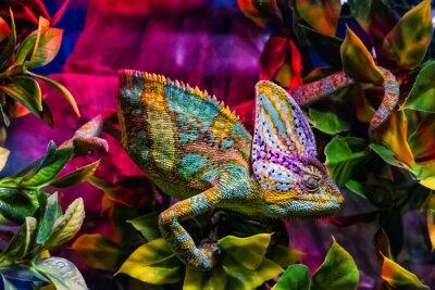 Fototapeta Wystawa zwierząt terrariaskich w Uzhhorodzie