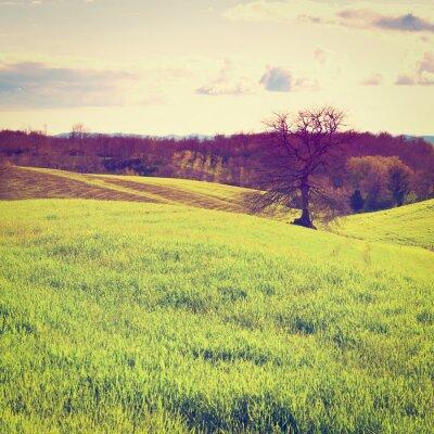 Fototapeta Wzgórza