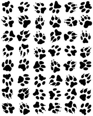 Fototapeta Wzór druku psów łapy na białym tle