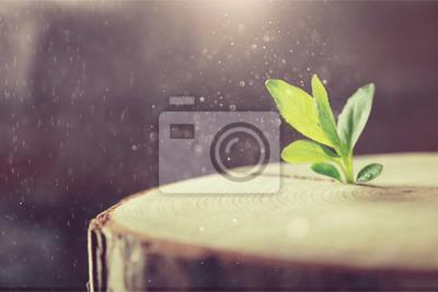 Fototapeta Wzrost nowego życia w tle