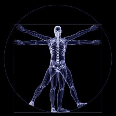 Fototapeta X-ray szkielet - witruwiański