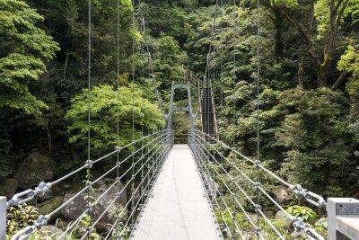 Fototapeta 森 と 猿 ヶ 城 渓 谷 に か か る 橋