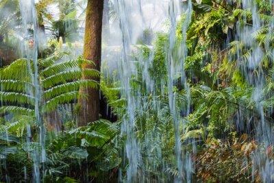 Fototapeta 熱 帯 雨林