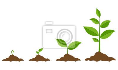 Fototapeta Fazy rosnące rośliny. Sadzenie drzewa plansza. Koncepcja ewolucji. Kiełkować, roślin, drzewo uprawy ikony rolnictwa. Ilustracja wektorowa w stylu płaski